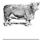 Cow Mix and Match Stamp Design by Three Designing Women